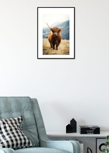 Poster Highland Cattle 2