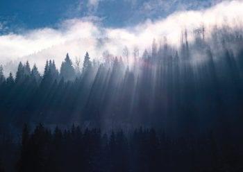 Poster Solljus och dis över skogsområde 1