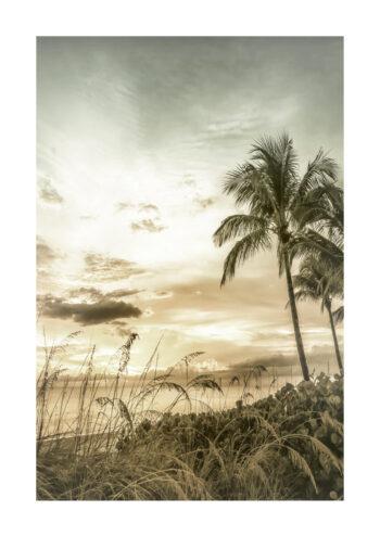 - Melanie Viola PosterTropisk strand 1