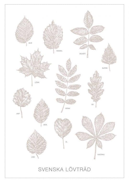 Poster Svenska träd 1