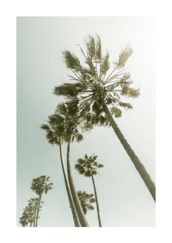 - Melanie Viola PosterUnder palmerna 1