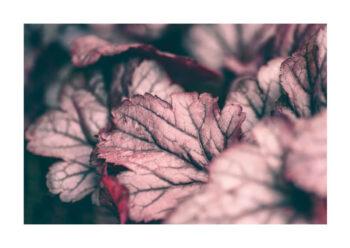 Poster Röd växt 1