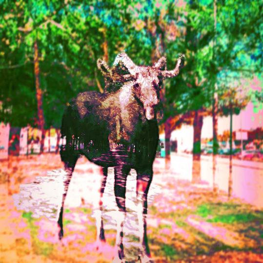- Fancy Frank PosterMisplaced Moose 1