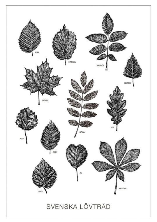 Poster Svenska lövträd svarta blad 1